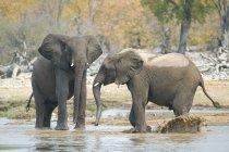 Elefantes africanos juvenis jogar no buraco de água no Parque Nacional de Etosha, Namíbia — Fotografia de Stock