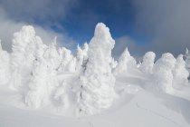 Alberi a Sun Peaks Ski Resort nei pressi di Kamloops, British Columbia Canada innevati — Foto stock
