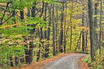 Orchard Hill Road in foresta d'autunno, Pelham, Ontario, Canada — Foto stock