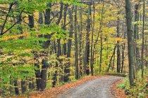 Orchard Hill Road im herbstlichen Wald, Pelham, Ontario, Kanada — Stockfoto