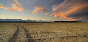 Domaine de la chaume et cloudscape dans le ciel près de Cochrane, Alberta, Canada. — Photo de stock