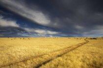 Грозових хмар над prairie у пасовища провінції Британська Колумбія, Канада — стокове фото