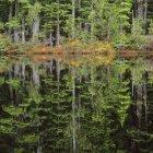 Осеннее отражение деревьев на спектакль озеро, Caren ассортимент, Британская Колумбия, Канада — стоковое фото
