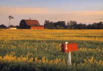 Canola field, red mailbox and farm house near Leduc, Alberta, Canada. — Stock Photo