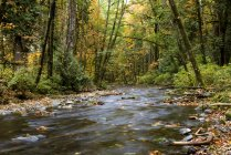 Gebirgsbach in Goldstream Provincial Park, Langford, British Columbia, Kanada — Stockfoto
