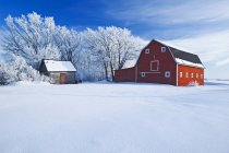 Red barn and trees coated with hoarfrost near Beausejour,  Manitoba, Canada — Stock Photo