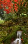 Autumnal foliage and stream in Japanese Garden, Butchart Gardens, Brentwood Bay, British Columbia, Canada — Stock Photo