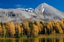 Herbstlichen Wald und See Reflexion in den Bergen der Zitadelle Pass Trail, britische Columbia, Kanada — Stockfoto