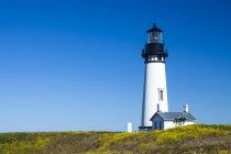 Yaquina Head lighthouse on flowery meadow in Oregon, USA — Stock Photo