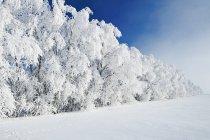 Hoarfrost sugli alberi vicino a Cooks Creek, Manitoba, Canada — Foto stock