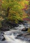 Осіннього листя під Донкастер парку поблизу Сен-Совер Лаврентійська, Квебек, Канада — стокове фото