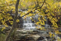 Flowing cascade of Fifteen Mile Creek and Martins Falls, Rockway, Ontario, Canada - foto de stock