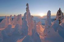 Snow ghosts at sunrise at Sun Peaks Resort, Thompson Okangan region, British Columbia, Canada — Stock Photo