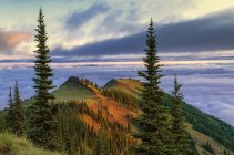 Cresta della montagna subalpina ad Alba a Deer Park, Parco nazionale di Olympic, Washington, Stati Uniti — Foto stock