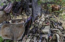 Pferdeanhänger im Wald und Weidetier im Hintergrund. — Stockfoto