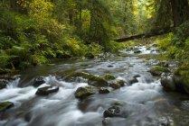 Gebirgsfluss in Goldstream Provincial Park, Langford, British Columbia, Kanada — Stockfoto