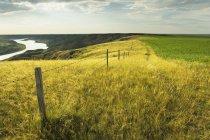 Південний Саскачеван в сільськогосподарський регіон біля лідера, Саскачеван, Канада — стокове фото