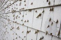 Effimere che copre i lati dell'edificio, telaio completo — Foto stock