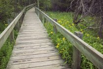 Marsh wooden boardwalk at Cave and Basin National Historic Site, Banff National Park, Alberta, Canada — Stock Photo