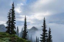 Cloud strewn mountain ridge of Deer Park, Olympic National Park, Washington, USA — Stock Photo