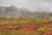 Herbstliche Laub Wiese in Bergen von Tombstone Territorial Park, Yukon Territorium, Kanada — Stockfoto
