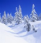 Fresh snow on Mount Elphinstone, Gibsons, British Columbia, Canada. — Stock Photo