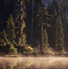 Nebbia di mattina sul lago al Fascia di Caren, Columbia britannica, Canada. — Foto stock