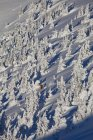Uomo backcountry sci attraverso fantasmi di neve in Kicking Horse Resort, Golden, British Columbia, Canada — Foto stock