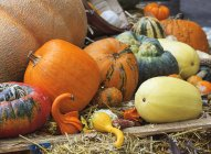 Thanksgiving display of autumnal harvest with pumpkins and gourds — Stock Photo