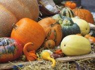 Pantalla de acción de gracias de la cosecha otoñal con zapallos y calabazas - foto de stock