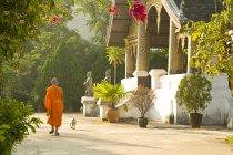 Chien de marche bouddhiste de moine devant le temple dans Luang Probang, Laos — Photo de stock
