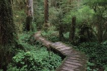 Cedar boardwalk through Carmanah Valley, Vancouver Island, British Columbia, Canada. — Stock Photo