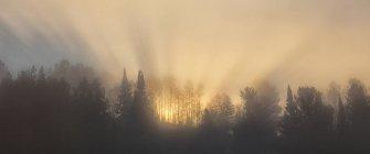 Sole che splende attraverso la nebbia dietro gli alberi del parco di Algonquin, Ontario, Canada. — Foto stock