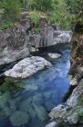 Kennedy River enroute to Pacific Rim National Park, Vancouver Island, British Columbia, Canadá . - foto de stock