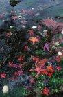 Sea anemones and sea stars at low tide, Dolomite Narrows, Gwaii Haanas, British Columbia, Canada. — Stock Photo