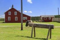 Roping Dummy in Bar U Ranch National Historic Site, Longview, Alberta, Kanada — Stockfoto