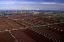 Aerial view of cranberry farms in Fraser Valley, British Columbia, Canada. — Stock Photo