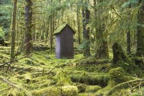 Weathered wooden building in rainforest, Haida Gwaii, British Columbia, Canada. — Photo de stock