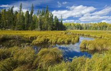 Grassy bog near Sioux Narrows, Northwestern Ontario, Canada — Stock Photo