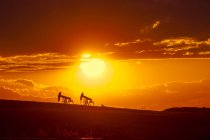 Нафтового родовища pumpjacks на заході сонця біля Уорнер, Альберта, Канада. — стокове фото