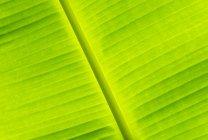 Крупный план зеленого бананового листа, полная рамка — стоковое фото
