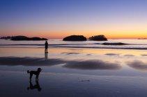 Person zu Fuß Pudelhund bei Sonnenuntergang am Mackenzie Beach, Tofino, Britisch-Kolumbien, Kanada — Stockfoto