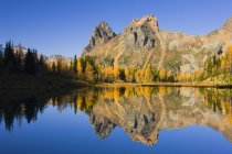 Larch trees and Lake Ohara in autumnal landscape in Yoho National Park, British Columbia, Canada — Stock Photo