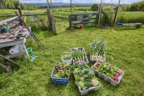 Crops and vegetables on meadow of community farm in British Columbia, Canada. — Stock Photo