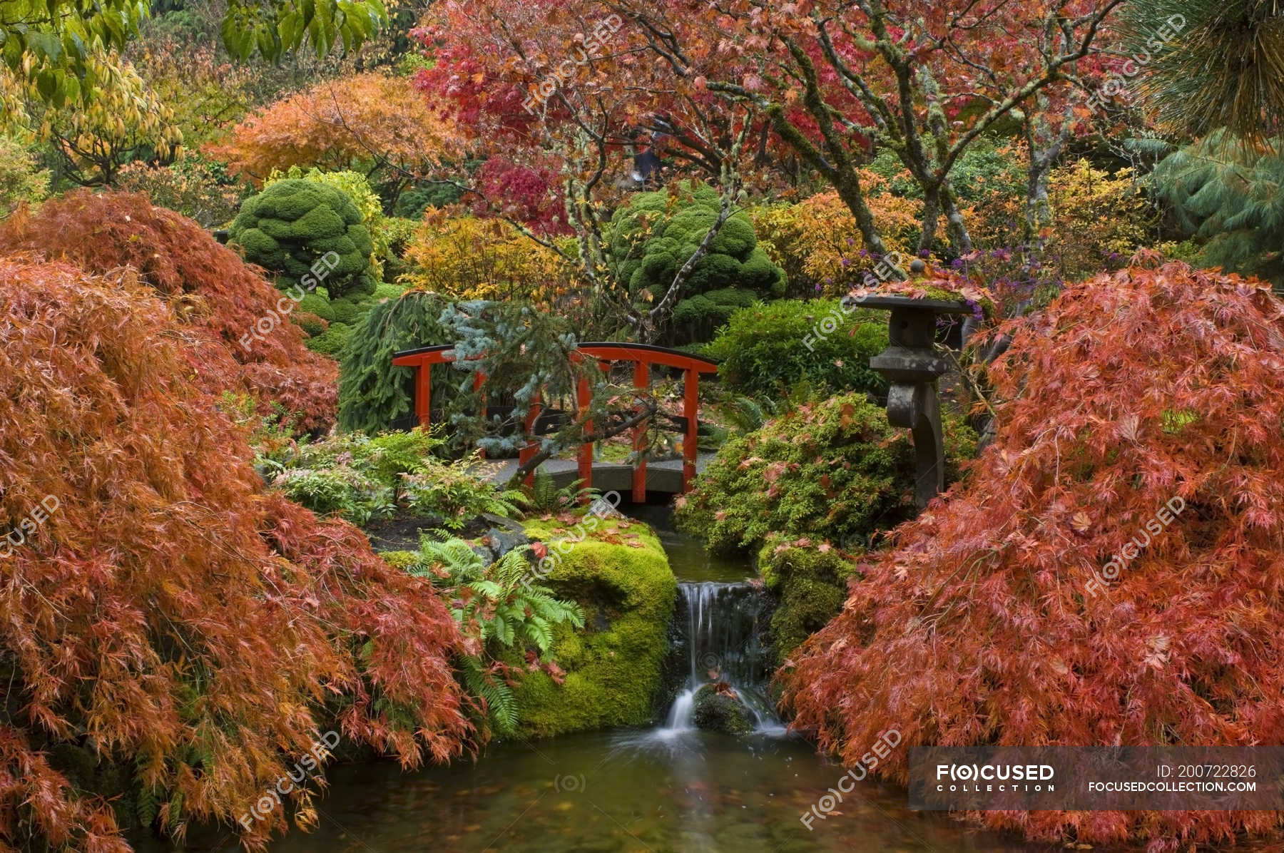 Autumnal foliage and stream in Japanese Garden, Butchart Gardens ...