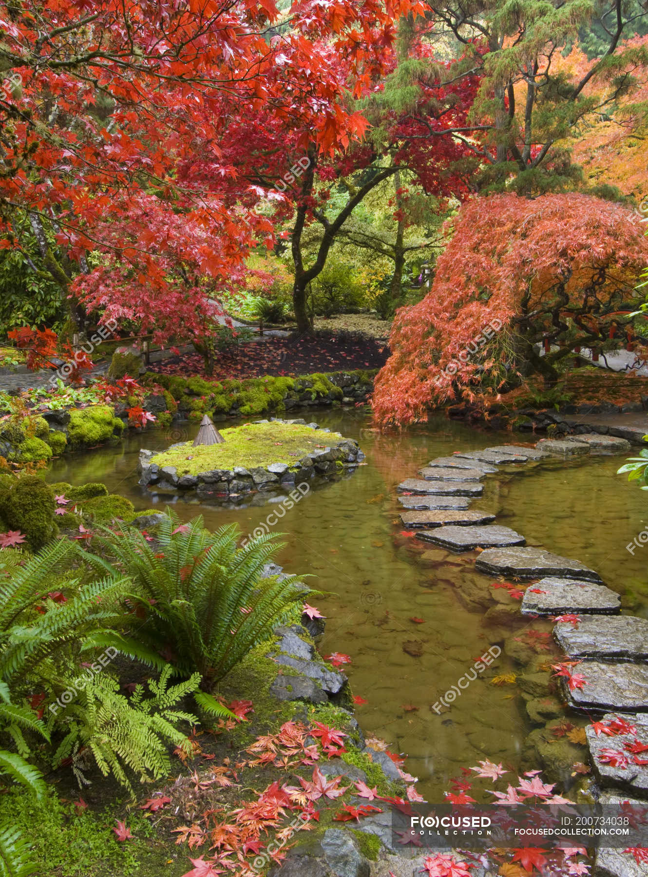 Autumnal foliage and path through stream in Japanese Garden ...
