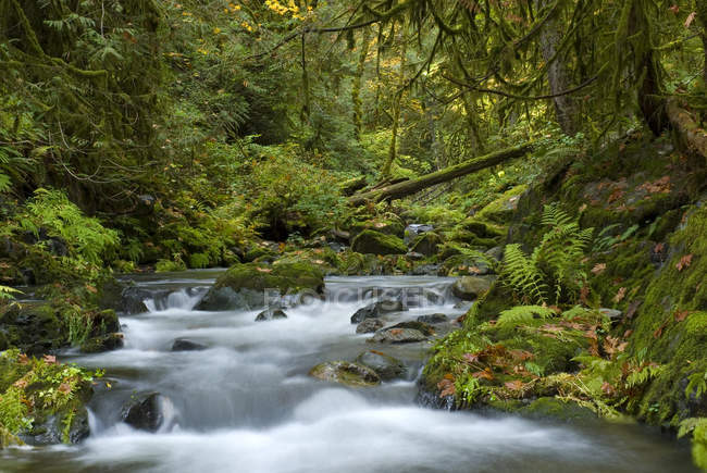 Gebirgsbach in Goldstream Provincial Park, Langford, British Columbia, Kanada. — Stockfoto