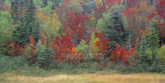 Bäume im herbstlichen Laub im gros morne Nationalpark, Neufundland, Kanada — Stockfoto
