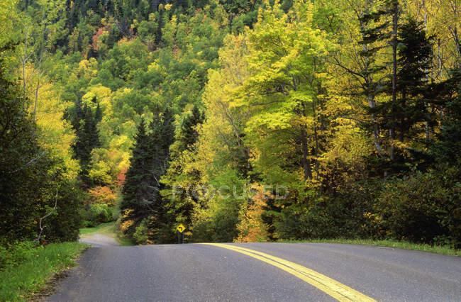 Дороги через дерева восени, Forillon Національний парк, Квебек, Канада. — стокове фото