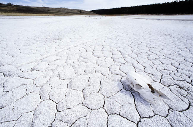 Crânio de cavalo no lago salino Cariboo, região de British Columbia, Canadá — Fotografia de Stock